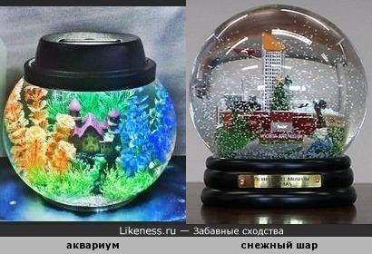 Круглый аквариум напоминает снежный шар