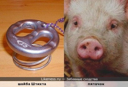 Шайба Штихта (спусковое устройство альпиниста) напоминает свиной пятачок