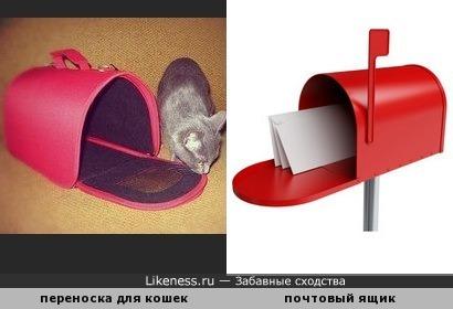 Переноска для кошек напоминает почтовый ящик