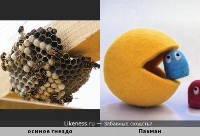 Осиное гнездо напоминает Пакмана