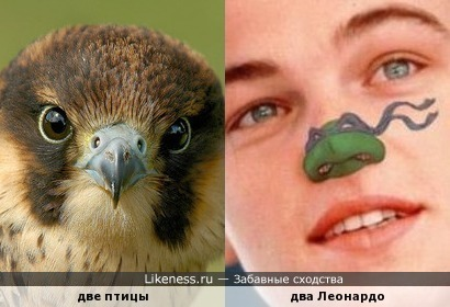 "Фотография сокола напомнила Интернет-мем ""Teenage Mutant Ninja Noses"""