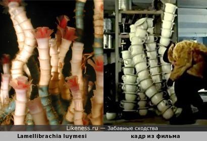 """Червь Lamellibrachia luymesi напоминает стопку горшков из """"Операции «Ы»"""""""