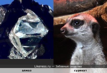 Алмаз в материнской породе напоминает суриката