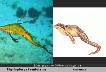 """Тело лучепёрой рыбы """"обыкновенный морской дракон"""