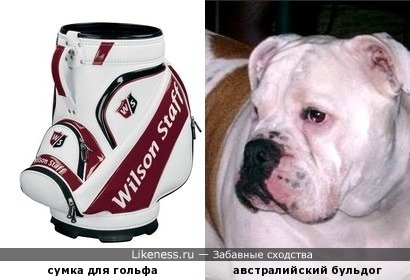 Сумка для гольфа напоминает бульдога