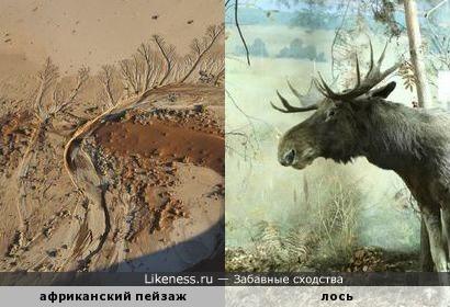 Детали африканского пейзажа с высоты напоминают лося