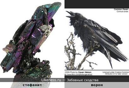 Минерал стефанит напоминает ворона