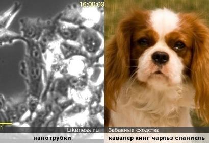Нанотрубки под действием электрического поля на долю секунды создали образ собаки