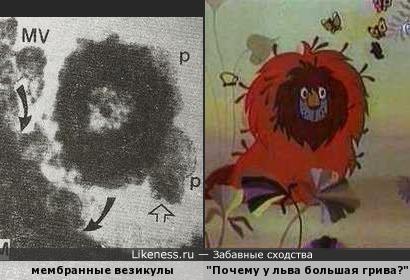 Мембранные везикулы в курином кишечнике напоминают льва