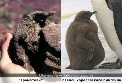 """""""Птенец пингвина"""