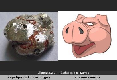 Серебряный самородок напоминает голову свиньи