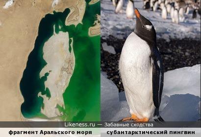 Фрагмент Аральского моря на снимке от 25.08.2000 напоминает пингвина