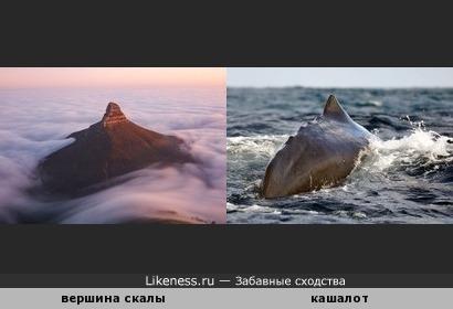 Вершина скалы напомнила кита