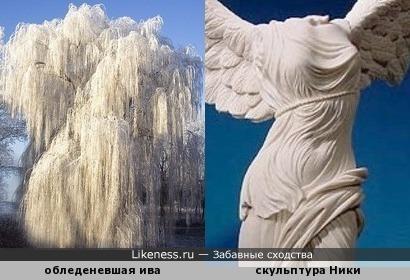 Обледеневшая ива напоминает древнегреческую скульптуру богини Ники