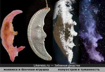 """""""Четыре месяца"""": моллюск Polycera janjukia, старая ёлочная игрушка, полуостров Камчатка, туманность IC 2118 (известная также как """"Голова Ведьмы"""")"""