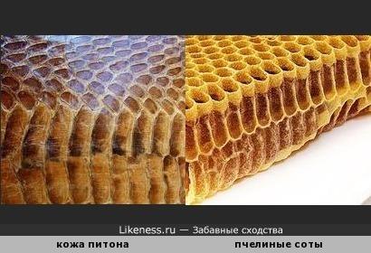 Кожа питона напоминает пчелиные соты