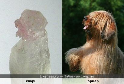 Кварц напоминает собаку породы бриар