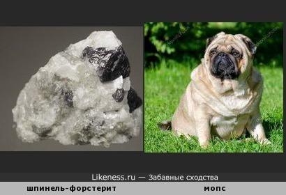 Минерал шпинель-форстерит напоминает толстого мопса