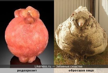 Минерал родохрозит еапоминает обросшую овцу
