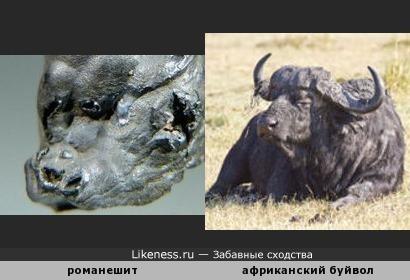 Минерал романешит напоминает голову африканского буйвола