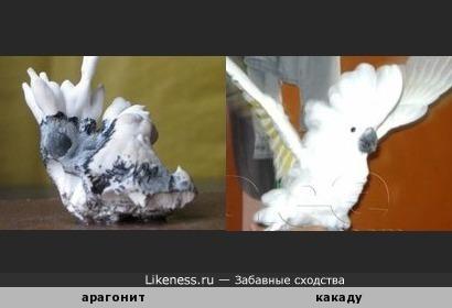 Минерал арагонит напоминает попугая