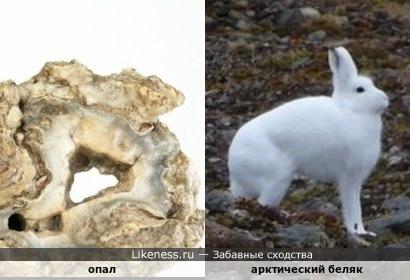Минерал опал напоминает зайца