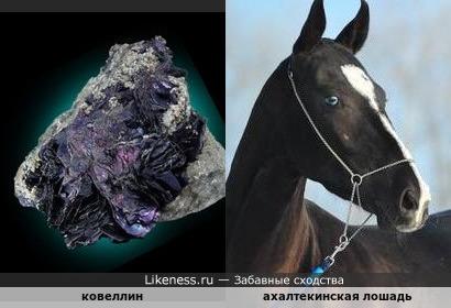 Минерал ковеллин напоминает лошадь