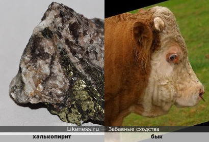 Минерал халькопирит напоминает быка