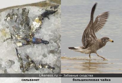 Минерал сильванит напоминает большеклювую чайку, держащую в лапах змею