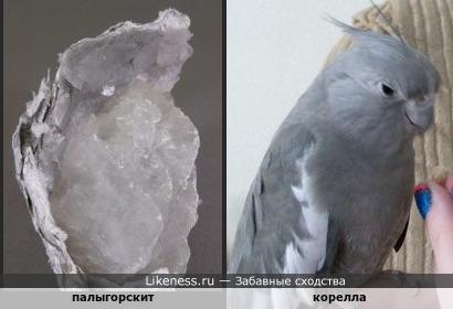 Минерал палыгорскит напоминает попугая