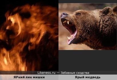 ЯРкий лик мишки похож на ярого медведя