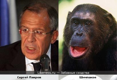 Сергей Лавров - копия обезьяны Шимпанзе