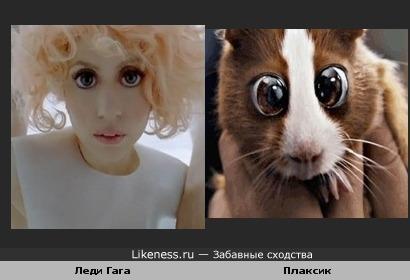 леди Гага и Плаксик похожи)