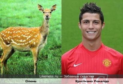 Олень очень похож на Кристиано Роналдо