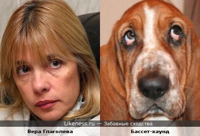 Вера Глаголева похожа бассет-хаунд