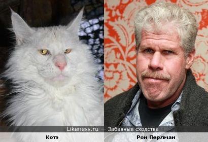 Котэ и Рон Перлман