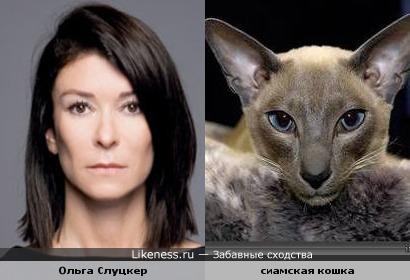 ольга слуцкер похожа на сиамскую кошку