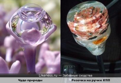 "Капля на цветке - ""розочка"""