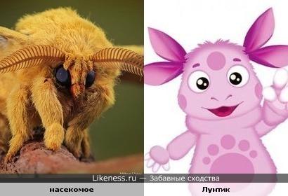 Фото насекомого напомнило Лунтика