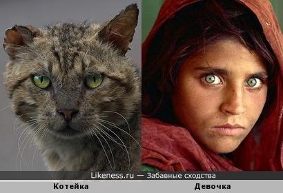 Котейка напомнил эту девочку