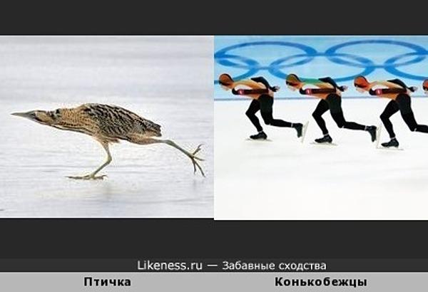 Птичка напоминает конькобежца