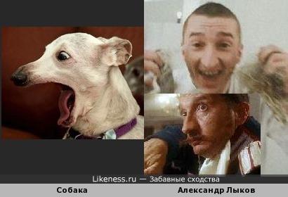Собака напомнила Александра Лыкова