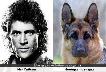 Мэл Гибсон / Немецкая овчарка