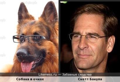Скотт Бакула и собакула