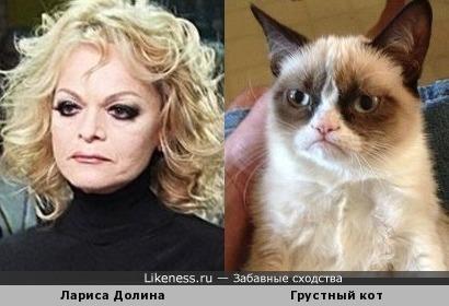 Лариса Долина - грустный кот