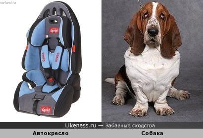 Автокресло похоже на собаку