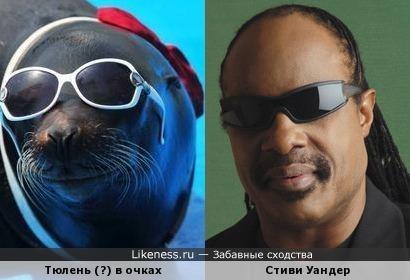 Тюлень и Стиви Уандер