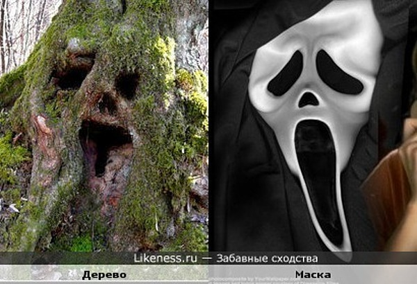 """Дерево похоже на маску из фильма """"Крик"""""""