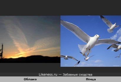 Облако и птица
