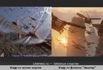 Жуки прилетели